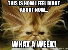 Image result for crazy week meme